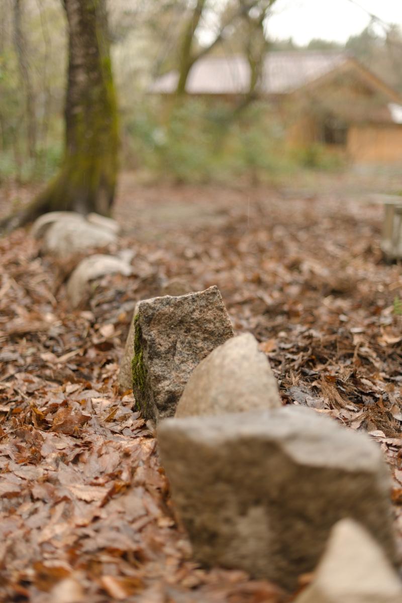 ikoi20190415-06 まず足元から 五頭山麓いこいの森